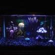 Trending: Jellyfish in the Home Aquarium