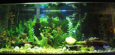 3 Problems Every Aquarist Can Avoid