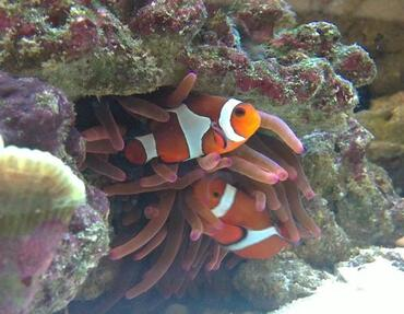 Though many saltwater fish diseases are treatable, the best option is to prevent your fish from becoming sick at all.