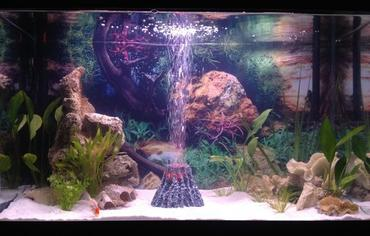 There are a variety of different aquarium lighting systems to choose from.