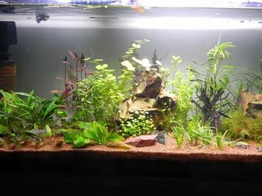 How to Select a Tank for a Freshwater Aquarium