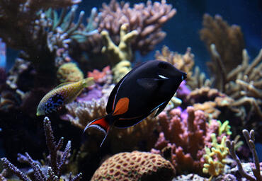 How to Deal with Marine Fungus in the Saltwater Aquarium