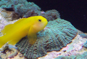 Top Recommendations for Tank-Raised Saltwater Fish