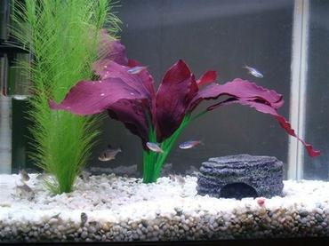 Fish Tank Maintenance and Cleaning