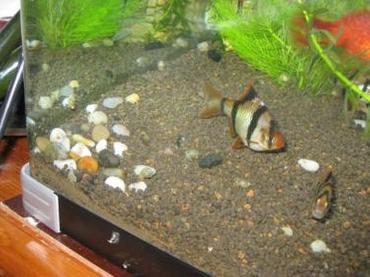Common Freshwater Tropical Fish Diseases