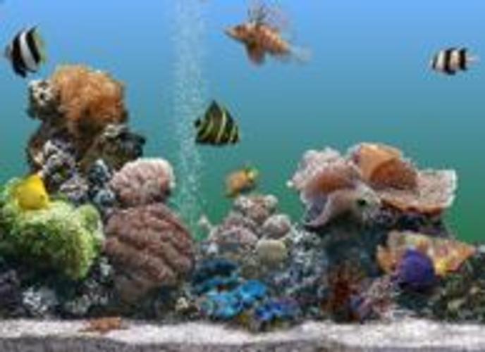 screensaver aquario