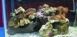 10 gallon reef tank