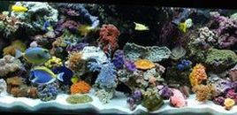 1208 Updated tank 31 different fish  We have added even more fish to our tank  We break all the rules and yet they still live
