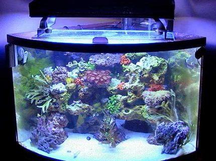 36 Gallon Fish Tanks Page 1