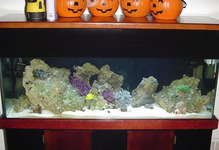60 gallon  i have 15 snails 15 hermits 4 emerald crabs 3 green cromis a pair of false perculas and one hippo tang perished  1 yellow tang and 1 sixline wrasse110 lbs of live fiji rock  i finally have coralline spotting after a sever diatom outbreakequipment i am usingfluval 404aqua c remora pro w rio 1400 pumpw surface box250w heaterOrbit Compact Fluorescent Lunar Lights 48 w465 watt 2 zoomed power head for flow