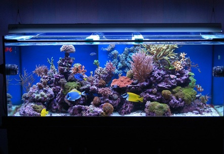 Latest Pics Of My One year old Reef Tank