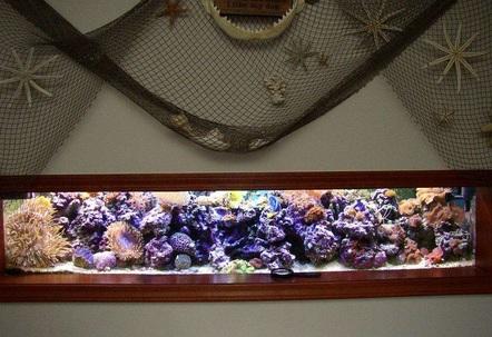 100 gallon mixed reef50 gallon sumprefugium