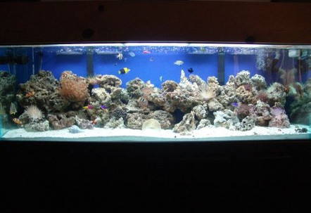100g reef 120 pound live rock 100 pound live sand 2 75g filters octopus skimmer 2 20k 48 floescent lots of fish!!!