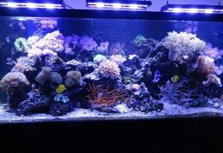 220 gallon fish tanks page 1 for 220 gallon fish tank