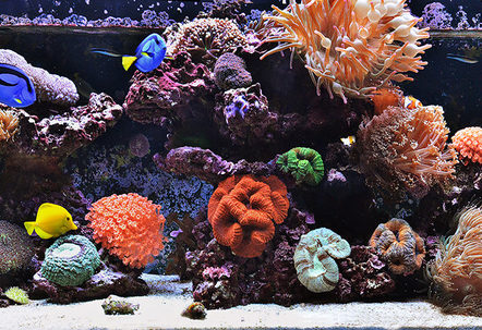 240g Mixed Reef Tank