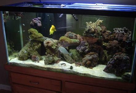 90 Gallon Reef Tank