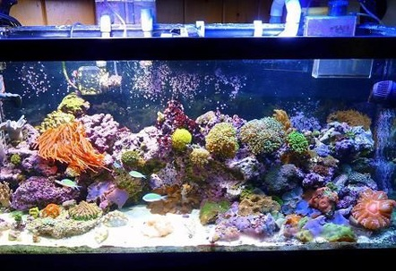 90 gal full view mixed reef