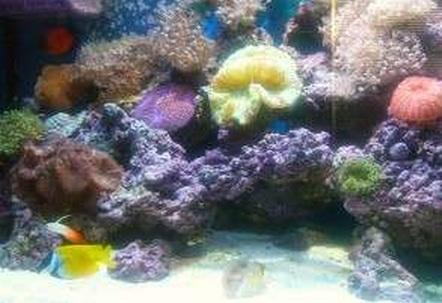 90 gal reef