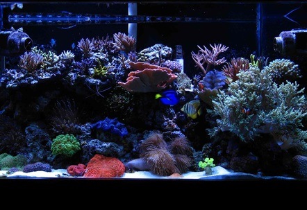 90 gallon mixed reef tank with two tunze streams 2 phoenix 14k 250 watt halidesmore images available at wwwreefmonkeycom!