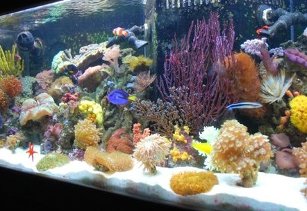 Javier who has created this site has it rigged so you cant even vote on our pictures Ryan  The Shepherds Reef Killer who built our tank has a tank posted which is NOT even his  we are done playing your third grade games We are going to solicite the advertisers and make our own web site and do what we want on it so dont worry well be back ad  1 again just like we were meant to be!!!!!!!!!!!!!!!!!!!!!!!!!!!!!!!!!!!!!Every kind of fish you can think of that everyone says you cant keep together we have in the tank  Updated 72408  WE PURCHASED EVERYTHING IN OUR TANK FROM JEFFS EXOTIC FISH IN COSTA MESA 714 5400880 THEY ARE VERY KNOWLEDGABLE AND CAN GET YOU STARTED EVEN IF YOU JUST WANT A LITTLE NANO TANK THANKS GUYS!!!!