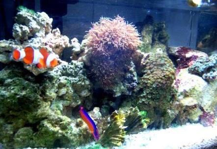 My 5 gallon nano reef  Soon to add a blue mushroom