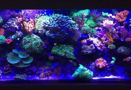 My 90 gallon mixed Reef