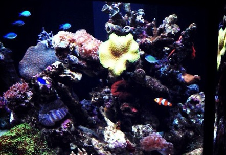 My over budgeted reef tank