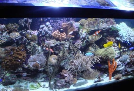 Pic of my 90 gallon reef