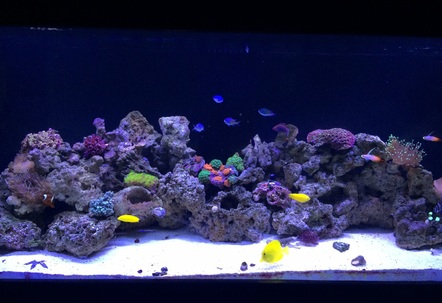 Setup began in November 2014  Current pic as of 31515 which is still a work in progress with adding live rock and growing the existing coral while adding additinal corals time goes by