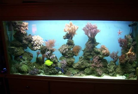 reef mix of corals and fish been up and runing for 6 months