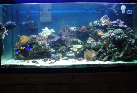updated pic of tank lots of new corals and critters