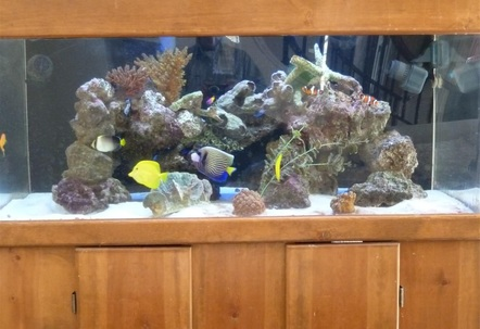 wide 100 gallons tank with Emperor tangs angels  Youtube httpwwwyoutubecomwatch?vsEXfzQ7KNk
