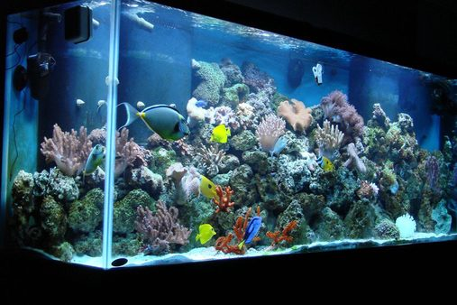 150 Gallon Reef Tank