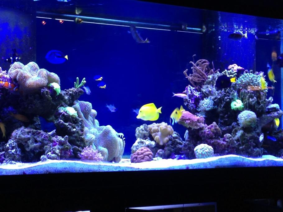 Shane black 39 s reef tanks photo id 40692 full version for Saltwater fish tank lights