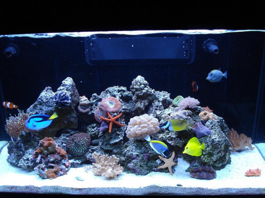 Loulou 39 S Reef Tanks Photo Id 31185 Full Version