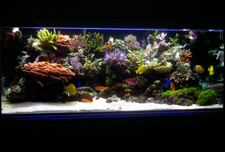 Main Tank: 225gl Starphire (60Lx36Wx24H) Euro-Braced Reef Tank 