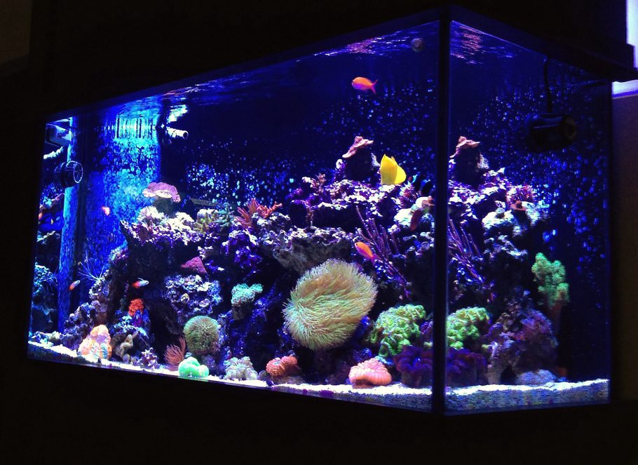 Most beautiful reef tanks 2014 for 90 gallon fish tank dimensions