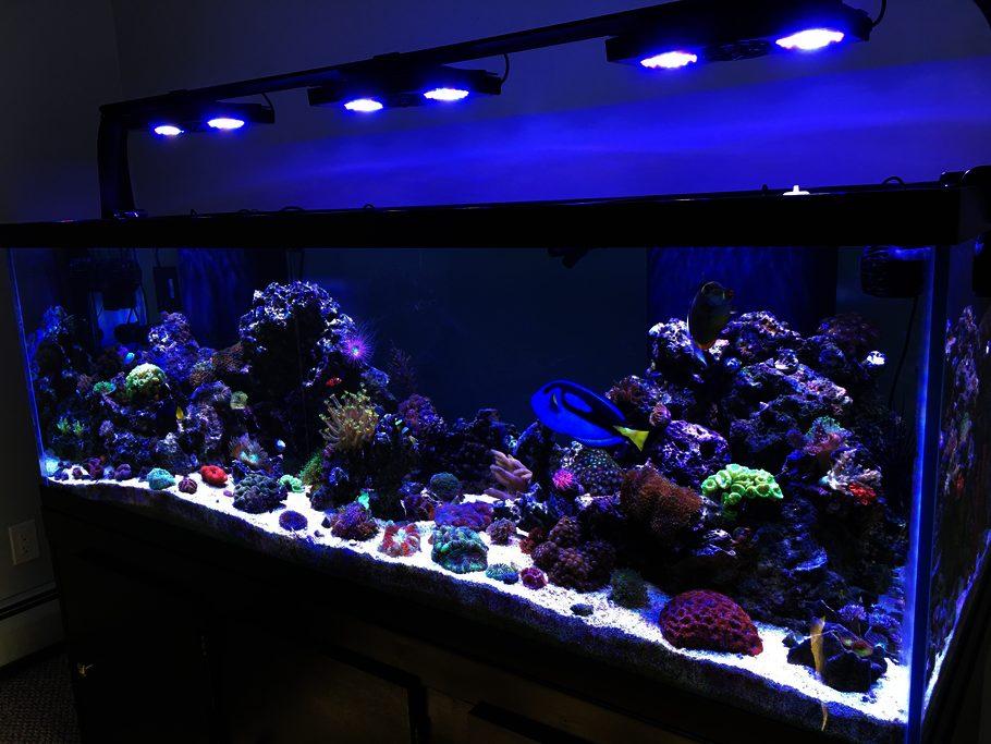 Cin288 S Reef Tanks Photo Id 44068 Full Version
