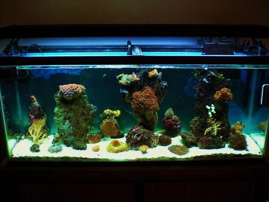 Saltwater fish tank maintenance 55 fish aquarium gallery for 55 gallon fish tank setup