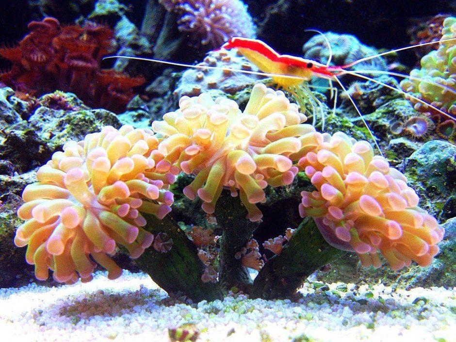 Saltwater aquarium setup guide