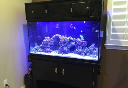 60 gallon saltwater reef fish tank