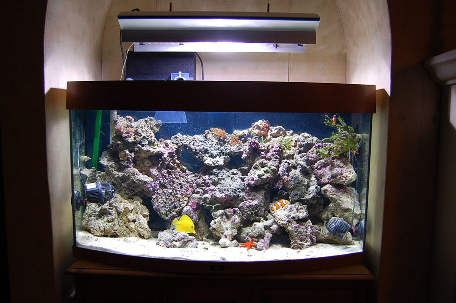 Most Beautiful Saltwater Fish Tanks All Time