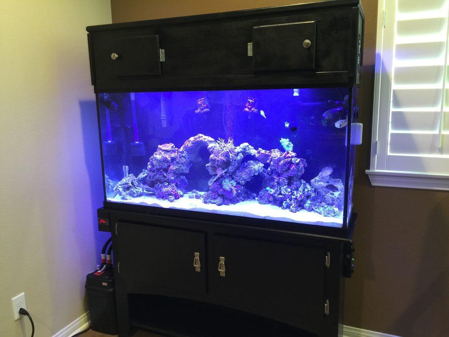 Most beautiful saltwater fish tanks 2015 for 10 gallon fish tank size