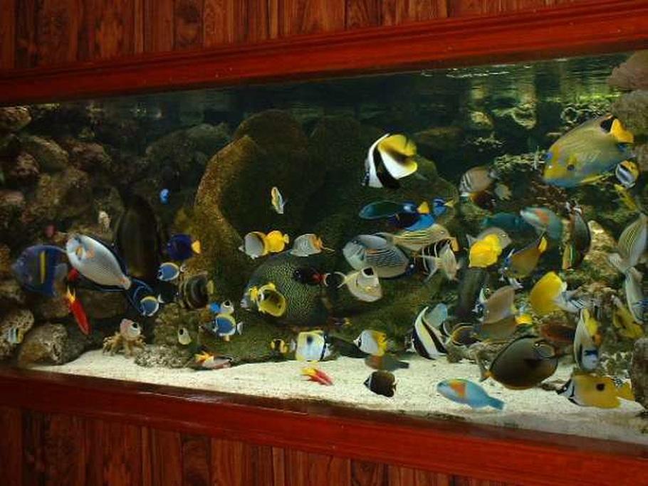 Fishlova2 39 s saltwater fish tanks photo id 10209 full for First fish tank