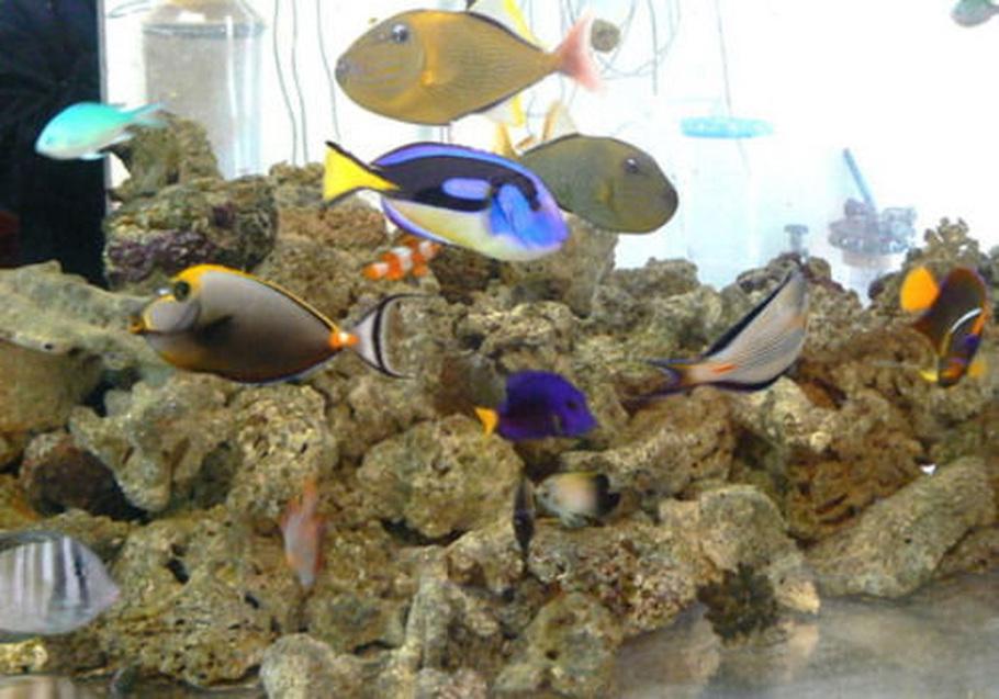Photo Caption: saltwater fish tank; no plants;