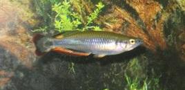 4 Madagascar Rainbow