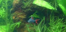 Rainbow Shark 110507