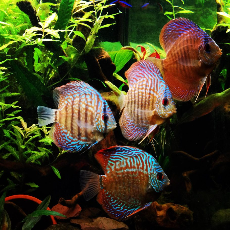Freshwater aquarium fish species ebook - 2014 Top 10 Freshwater Fish