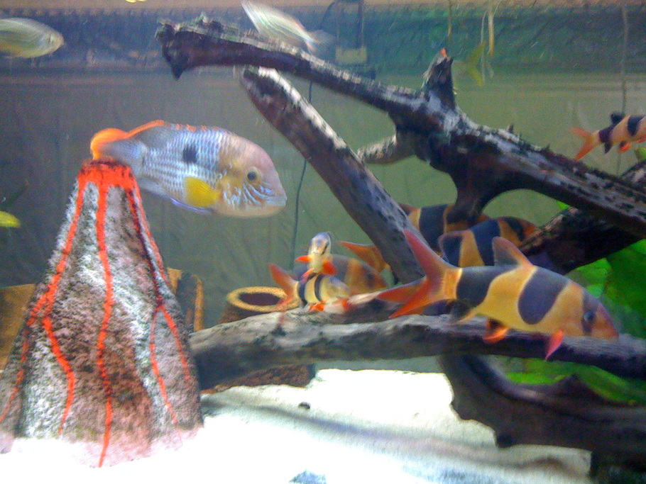 Netiton 39 s freshwater fish photo id 26791 full version for Fish tank camera