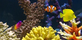 Nemo with his friends  But where is Dory ?